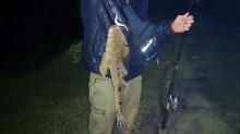 大きな大きな魚!!